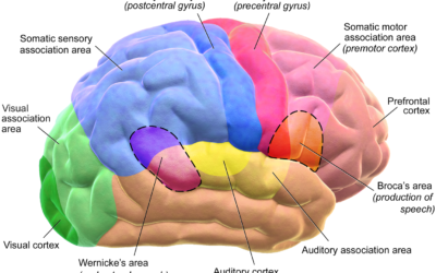 Autism Research: Autism and Behavior Disorders